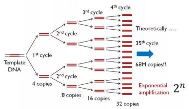 PCR Nedir?